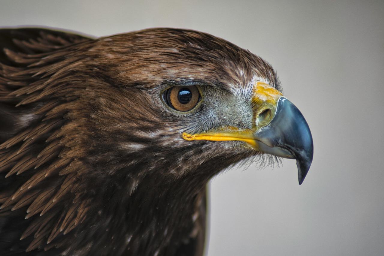 Картинка орел с оружием