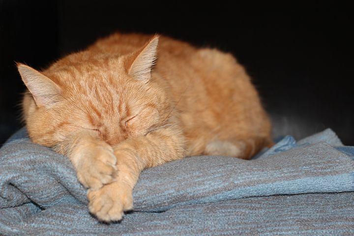 красный котенок во сне практически встречал