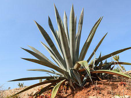Can Aloe Vera Assist Acne?