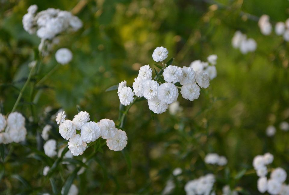 White flowers small bush free photo on pixabay white flowers small flowers bush green white mightylinksfo Images