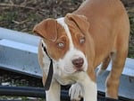 dog, pup, puppy