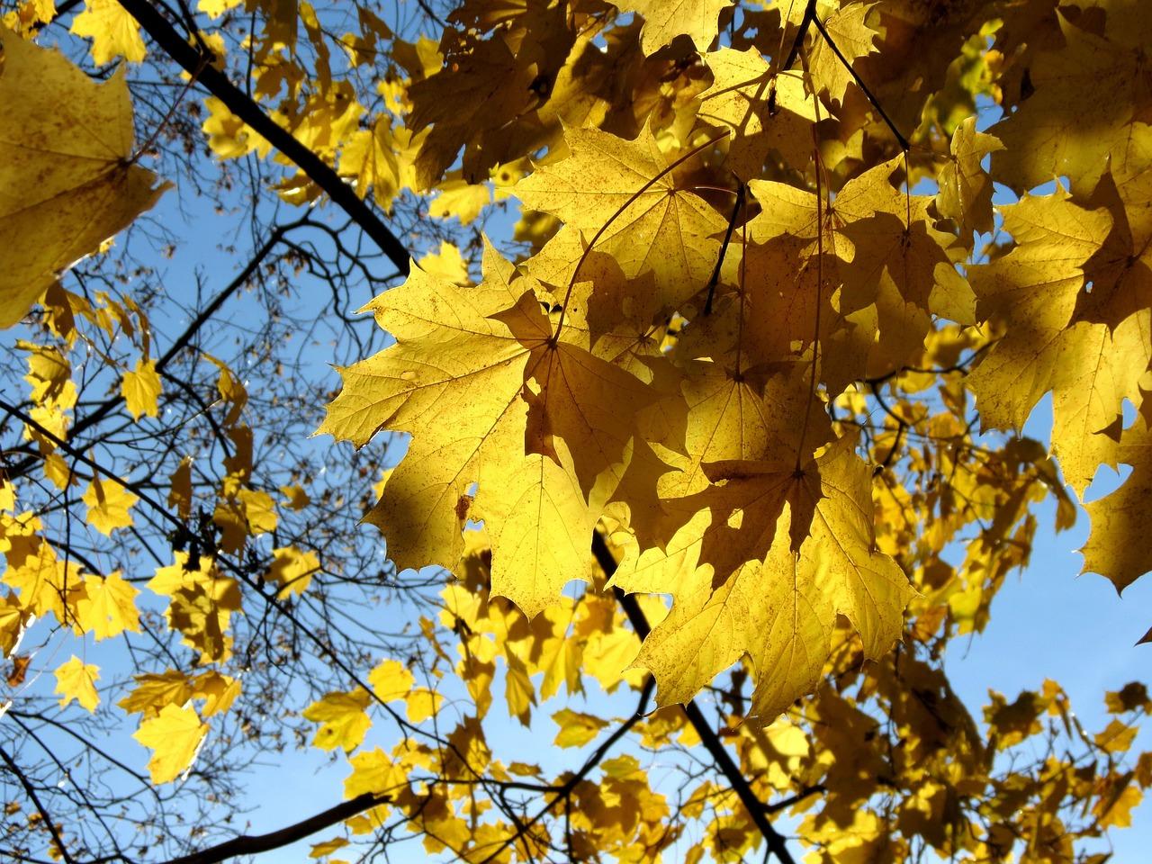 Картинки листьев желтых, дню
