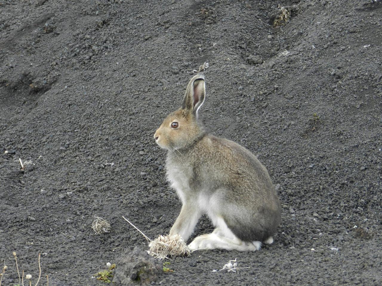 для заяц и его нора картинки более