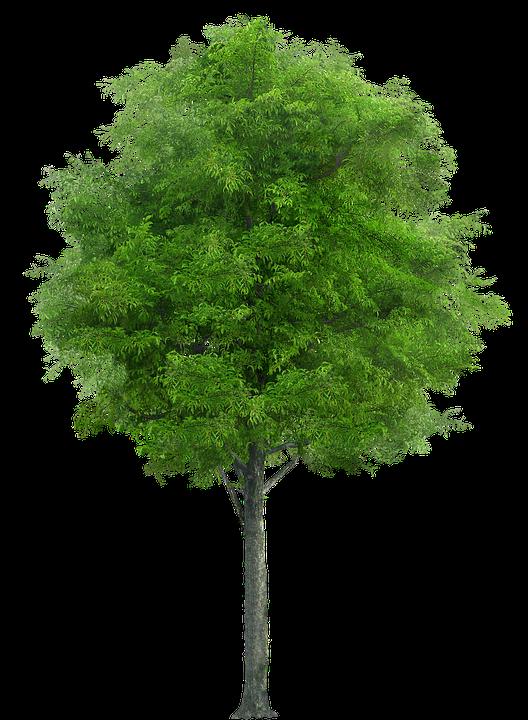 Tree Nature Forest · Free photo on Pixabay