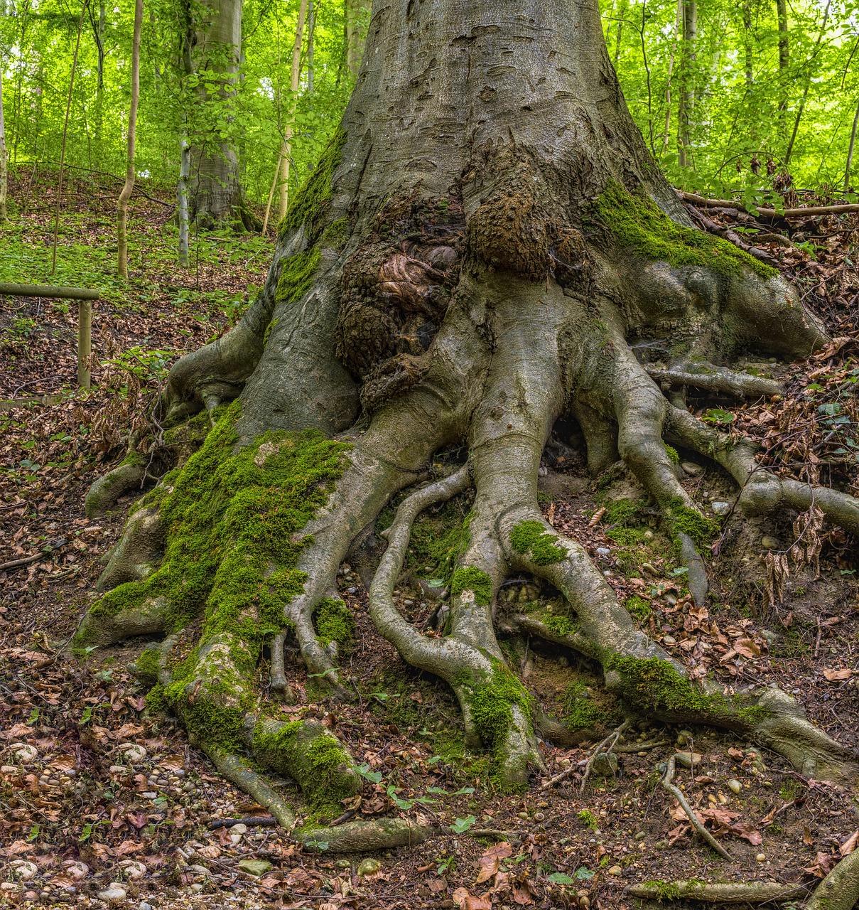 профессиональных деревья с корнями фото россии это мощное