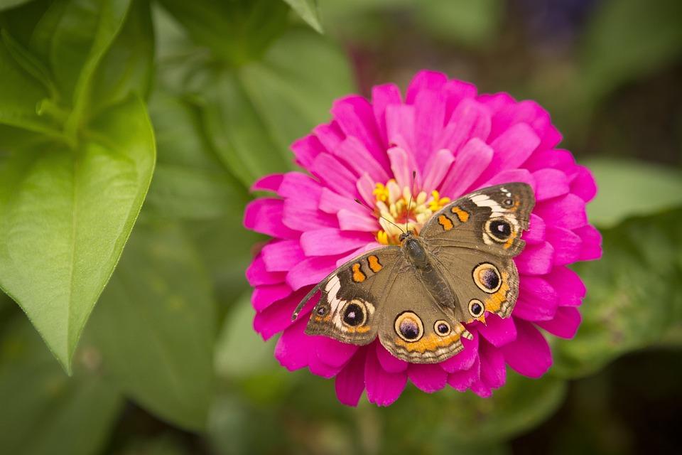 Blumen Schmetterling Kostenloses Foto Auf Pixabay