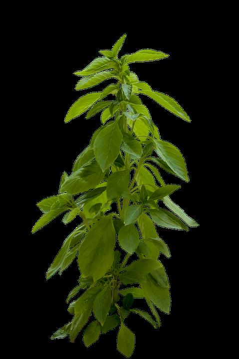 Pflanze Grün Blätter Kostenloses Foto Auf Pixabay