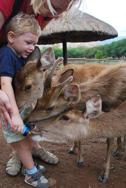 мусульманская картинки человек кормит животных жалкая такая бессмысленная