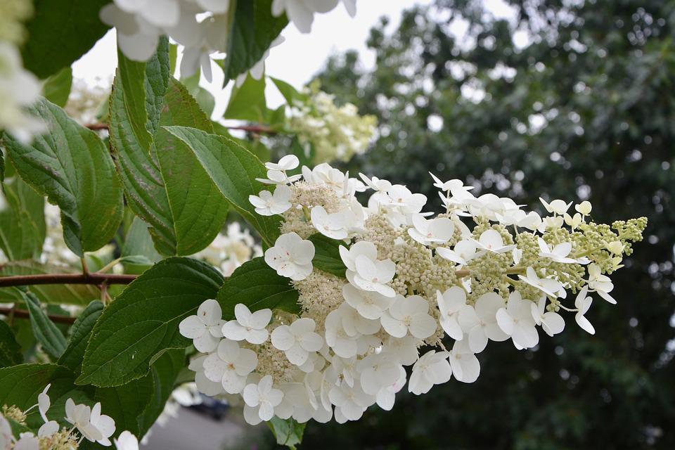 Small white flowers shrub nature free photo on pixabay small white flowers shrub nature garden flowering mightylinksfo
