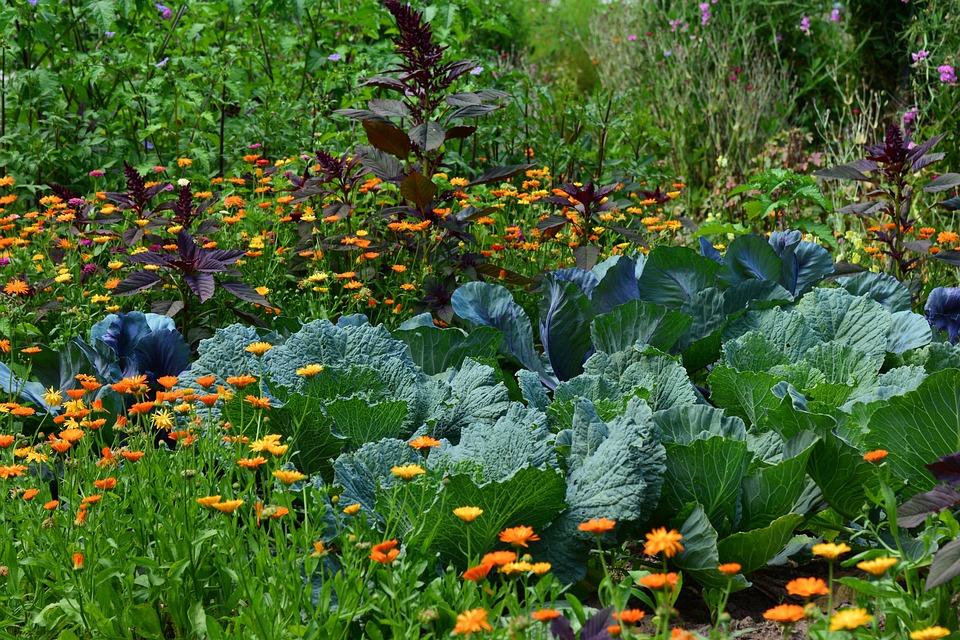 como usar canela na horta ou jardim