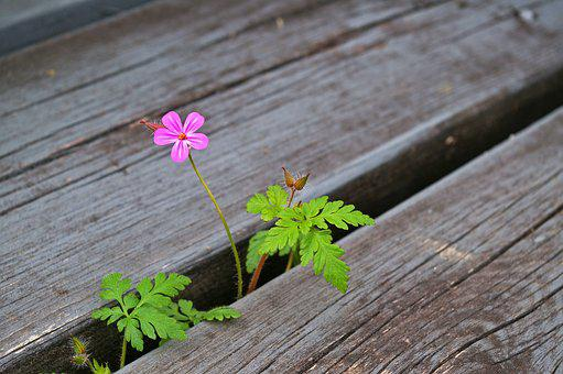 Plant, Stairs, Nature, Flowers, Leaves