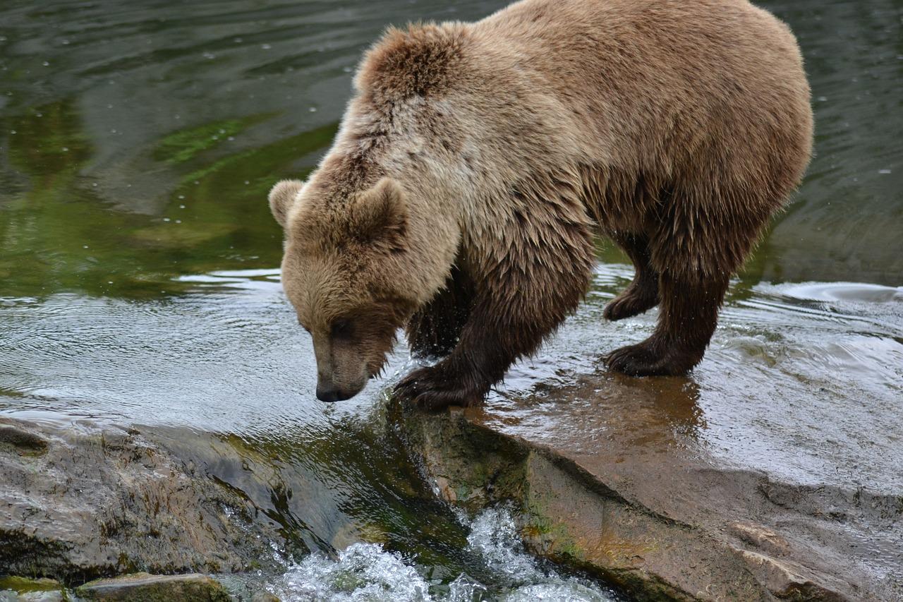 Картинка медвежонка у воды