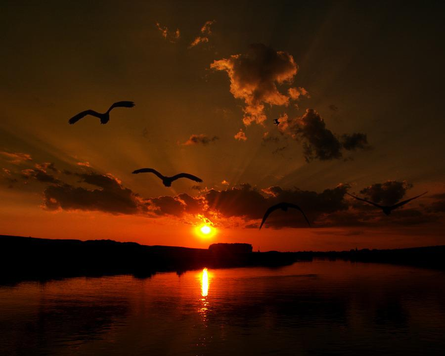 Αποτέλεσμα εικόνας για pasarea apus soare