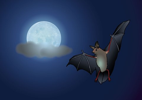 Bat, Moon, Night, Clouds, Moonlight