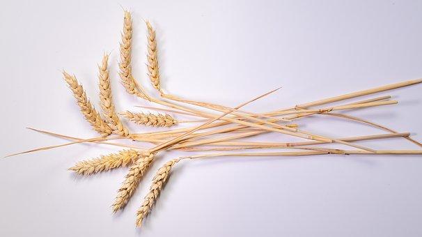 Мировой рынок зерна: улучшение перспектив экспорта в Китай вдохновило Чикаго