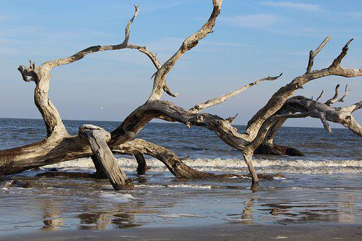 Driftwood, Beach, Water, Natural, Coast