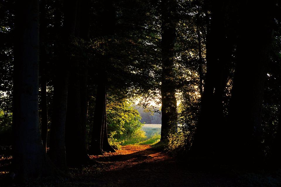 Лесная Поляна, Леса, Зеленый, Природы, Поляна, Пейзаж