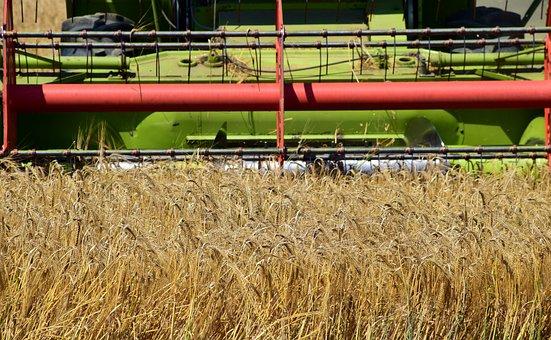 Ростовская область заняла первое в России место по урожаю зерна