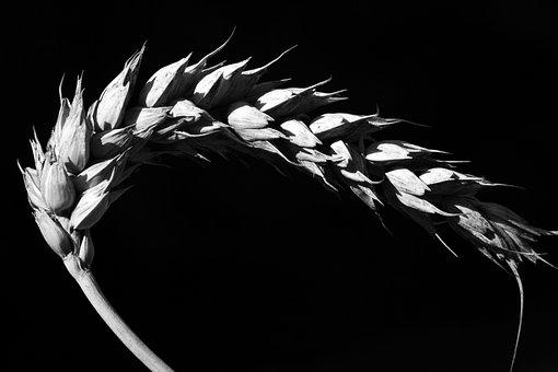 Мировой рынок зерна: кто-то теряет, кто-то находит...