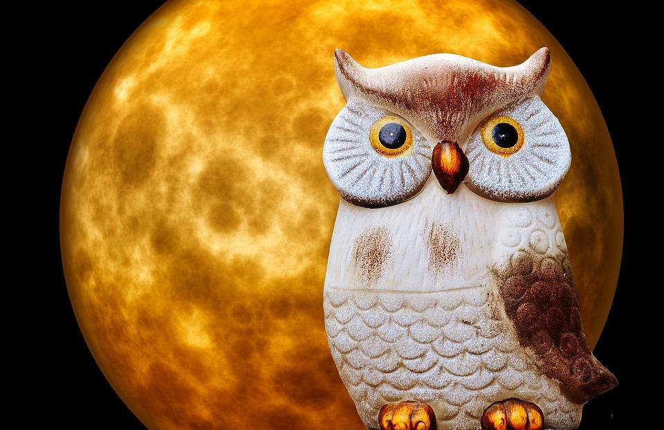 81 Foto Gambar Burung Hantu Dan Bulan HD Terbaru Gratis