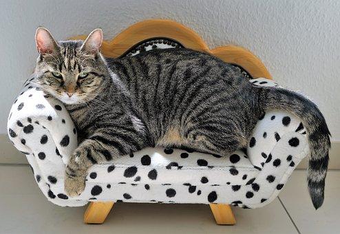 Cat, Tigre, Canapé, Dalmatiens, Chien