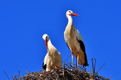 Storch Bilder Pixabay Kostenlose Bilder Herunterladen