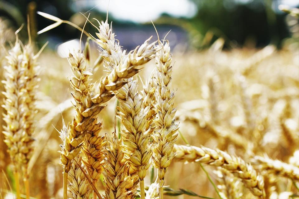 Россия передала КНДР около 4 тыс. т зерна в качестве гуманитарной помощи