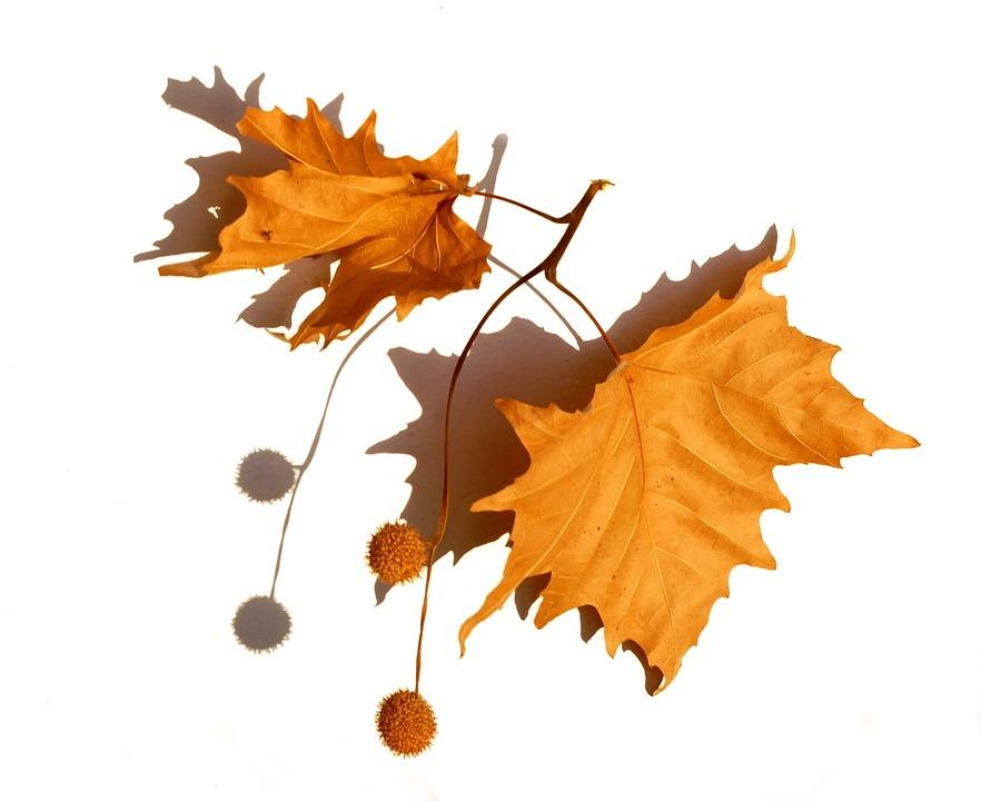 Herbarium Blätter natur herbarium trockene blätter kostenloses foto auf pixabay