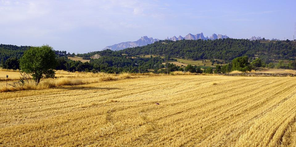 Resultado de imagem para plantacao cereais