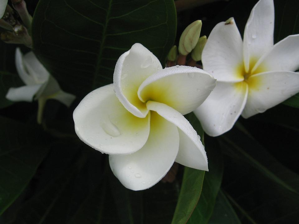 White Flower Yellow · Free photo on Pixabay
