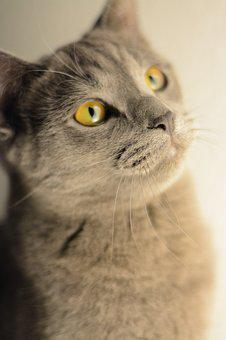 Cat, Kitten, Portrait, Domestic Cat
