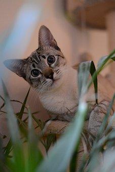 Cat, Portrait, Kitten, Domestic Cat