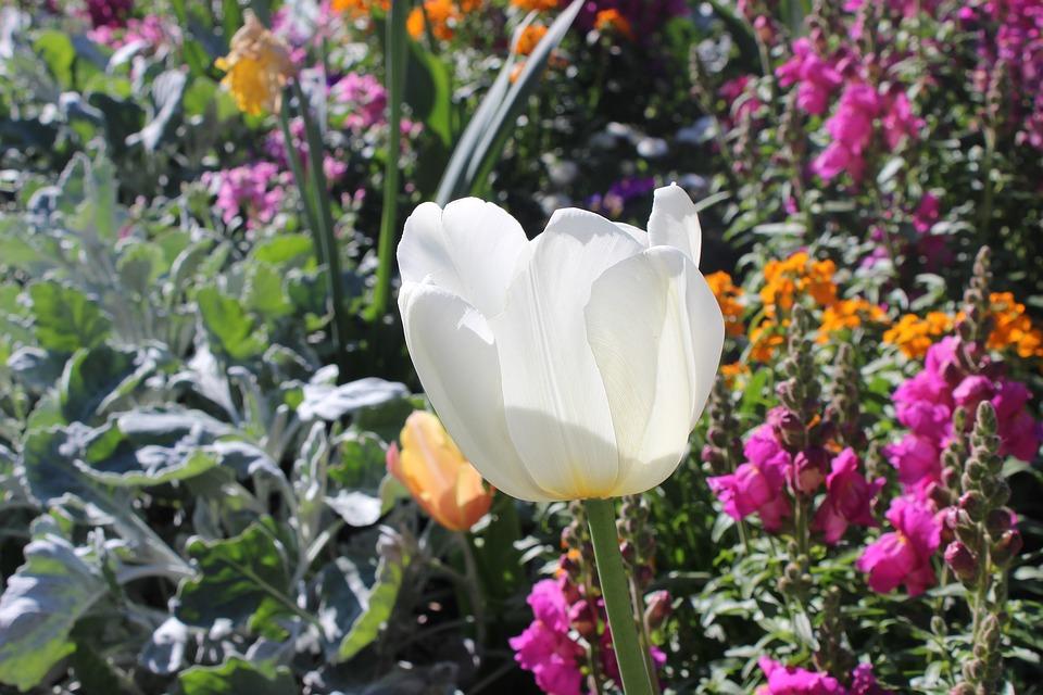 Pflanze Blume Jardin Des Plantes - Kostenloses Foto auf Pixabay