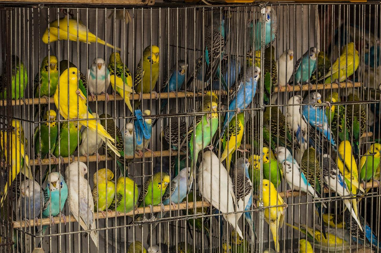 Картинки клеток попугаи
