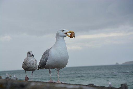 カモメ, ビーチ, 海, 食パン, 風, 夏