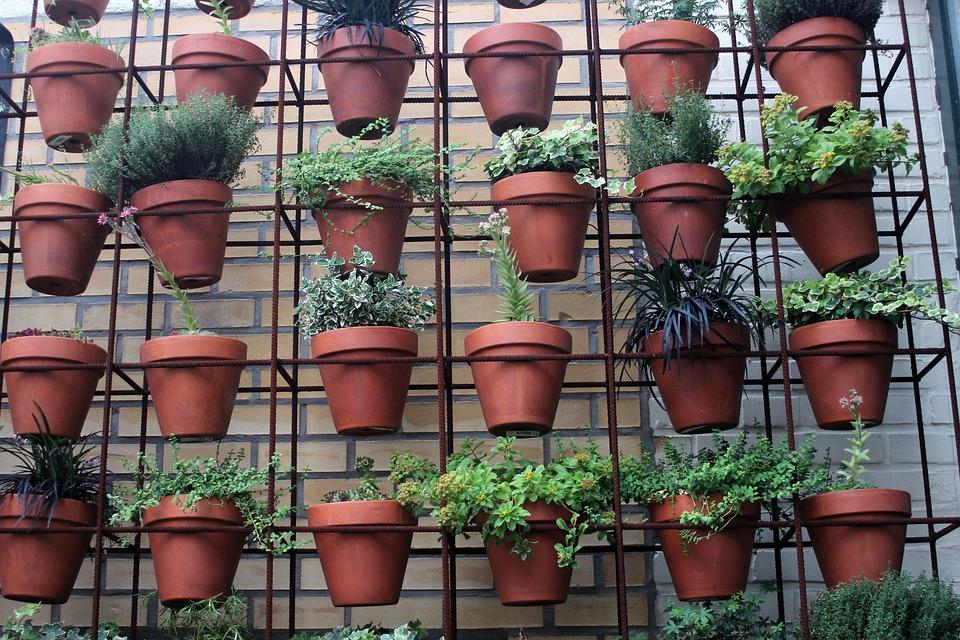 horta em apartamento o que plantar