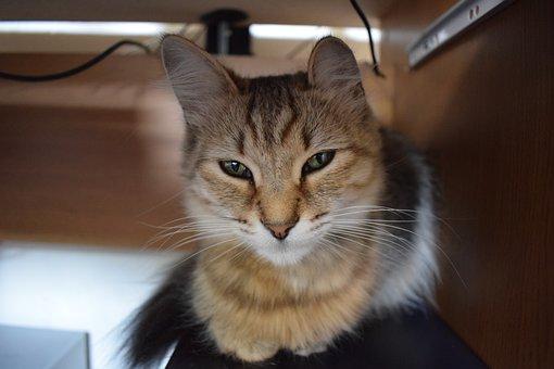 Cat, Kitten, Animal, Cute, Pet, Kitty