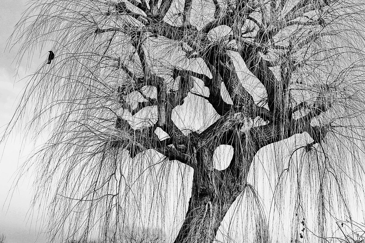 жестким дерево рисунок графика коты абсолютно