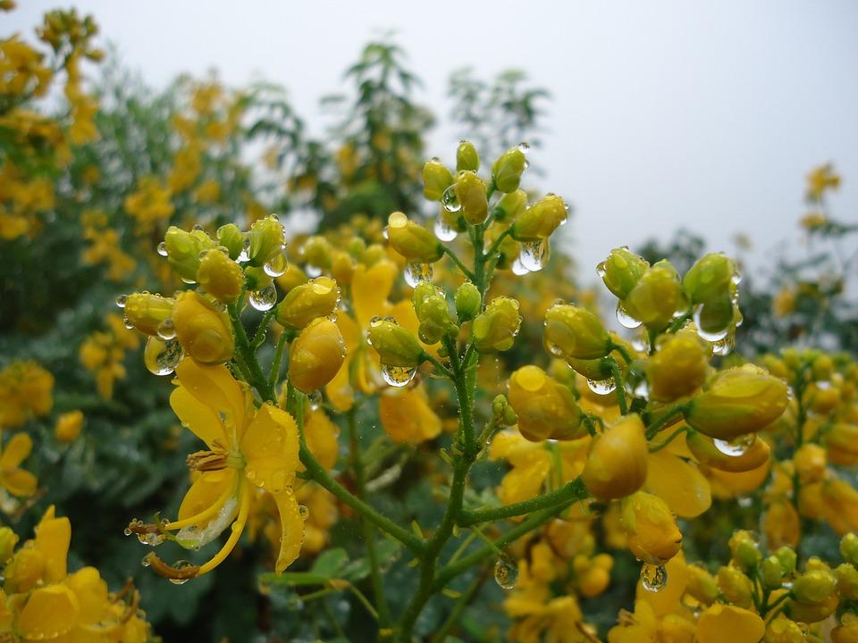 Flores Amarillas Silvestres Foto Gratis En Pixabay