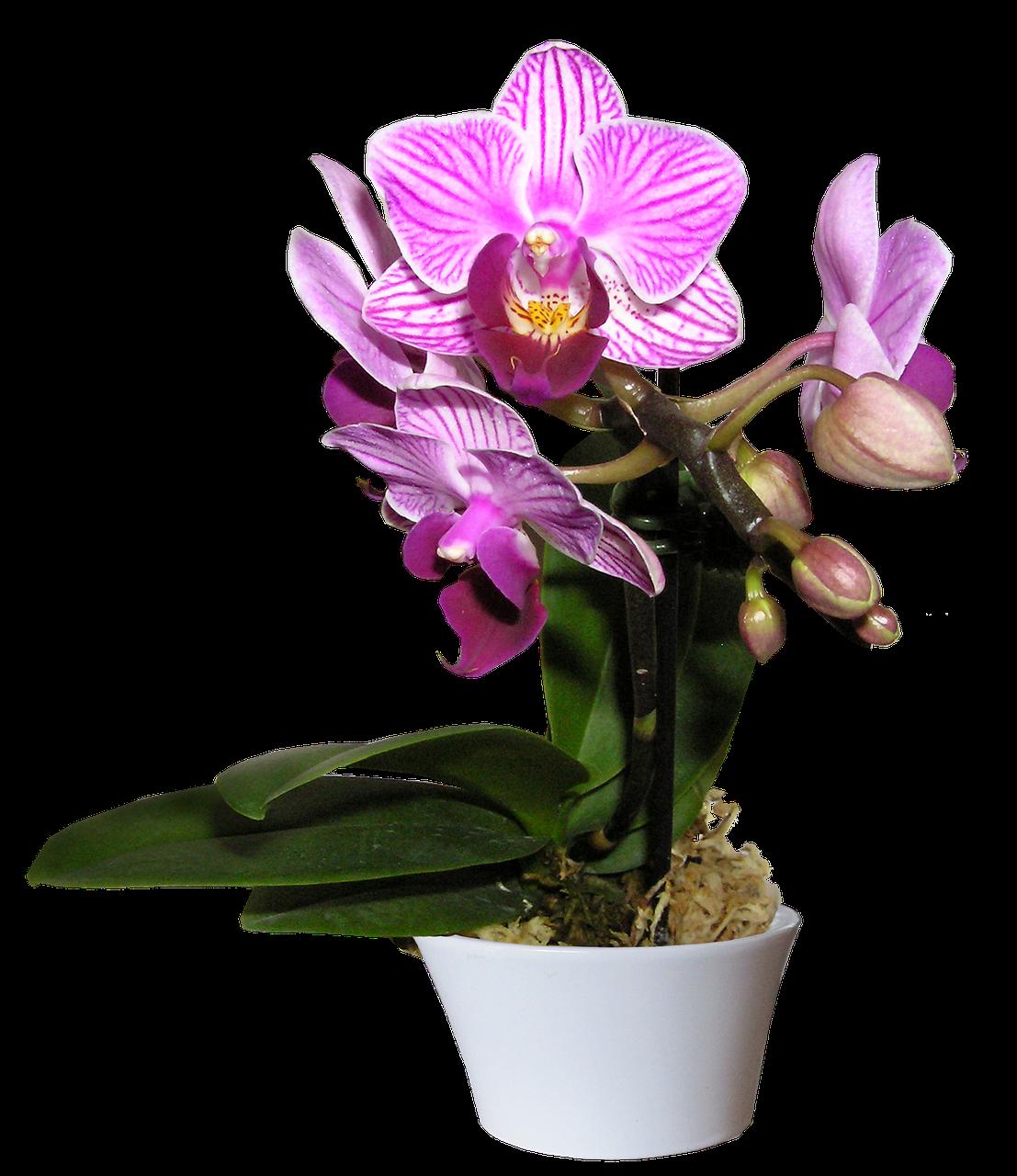 орхидеи фото красивые картинки в горшках алюминиевой