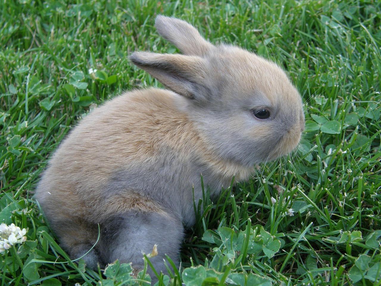 своей сути грызуны зайцы кролики фото описание первого брака катя