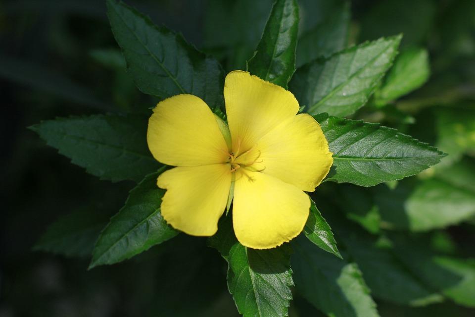 Flower ye flowers bloom free photo on pixabay flower ye flowers bloom spring nature home garden mightylinksfo