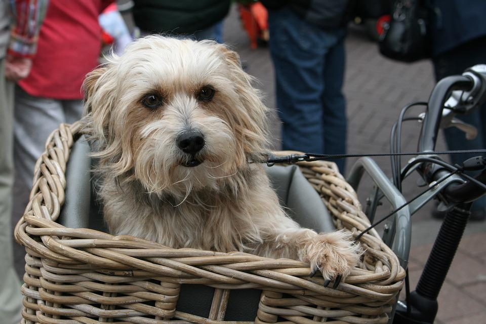hund fahrradkorb perfect dog in bicycle basket sweet hund. Black Bedroom Furniture Sets. Home Design Ideas