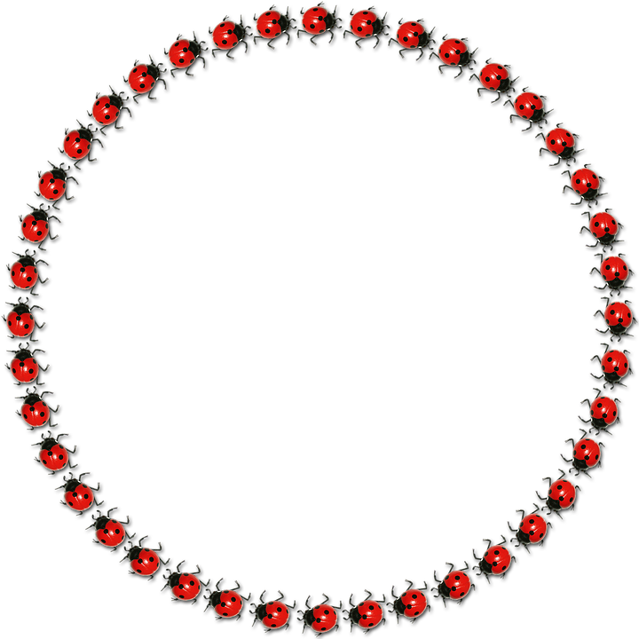 Frame Round Lucky Ladybug · Free image on Pixabay