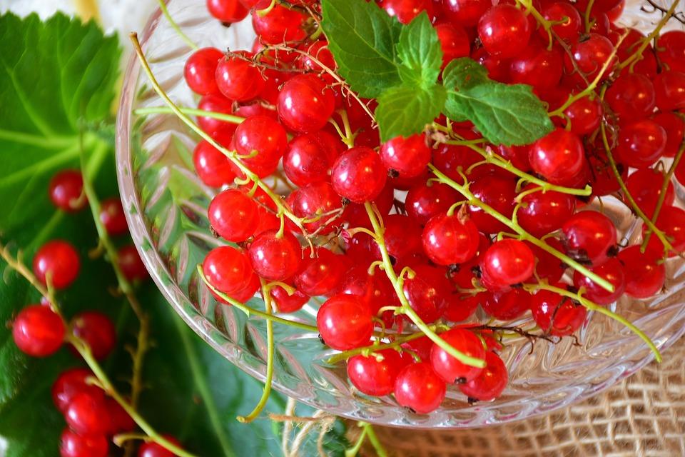 Бесплатная фотография: Смородины, Красный - Бесплатные фото на Pixabay - 2534939