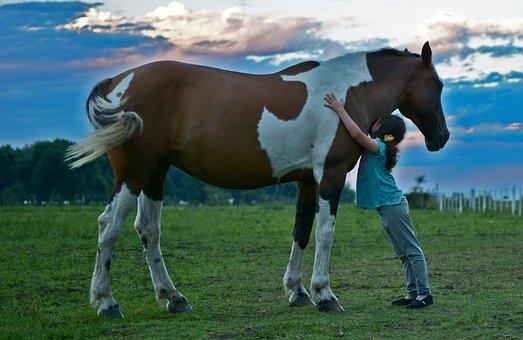 Лошадь, Поле, Девушка Лошадь