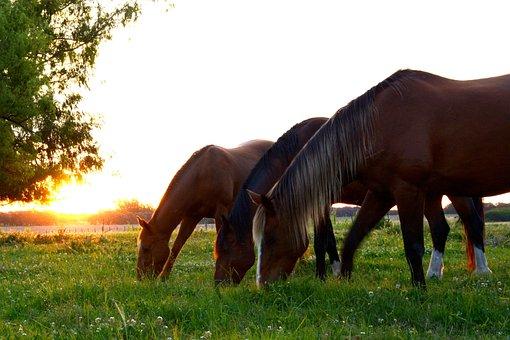 Horses, Horse, Group Horses