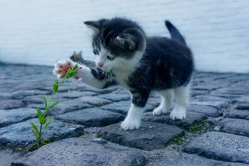 Cat, Flower, Kitten, Stone, Pet, Animals