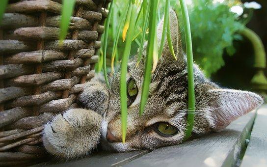Chat, Jardin, Panier, Chats, Animal