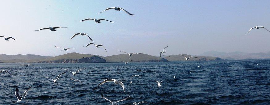 Причиной массовой гибели рыбы на севере Байкала стали паразиты